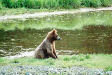 Alaska Baer