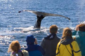 Walbeobachtungs-Tour Juneau, Alaska