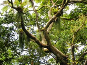 Esquinas-Regenwald ©LatinConnect