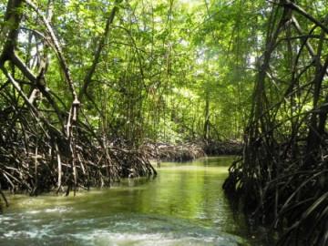 Bootstour durch den Mangrovenwald ©LatinConnect
