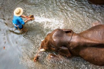 Thailand, Elefantencamp ©Royal Silk Holidays