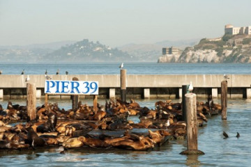 Pier 39 in San Francisco, USA ©Visit California