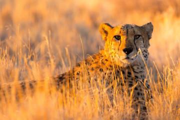 Namibia: Wildtiere