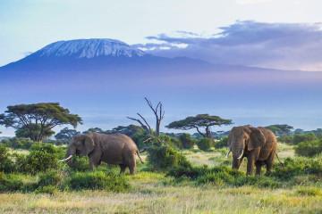 Ostafrika Elefanten