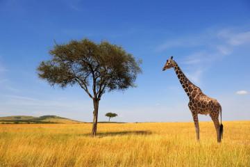 Reise Tansania