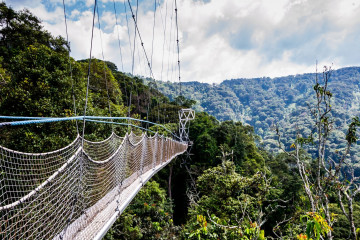 Nyungwe Forest Nationalpark