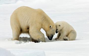 Arktis Reise - Im Reich der Eisbären