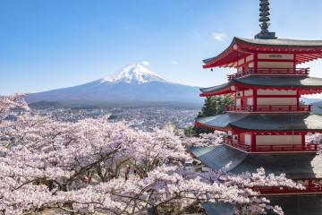 Japan Reise: Mount Fuji & Kirschblüten