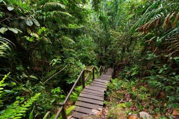 Malaysia Reise - Bako Nationalpark - Dschungel