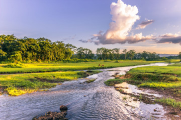 Reise Nepal - Chitwan Nationalpark