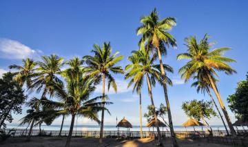 Philippinen Urlaub: Palmenstrand Dosol