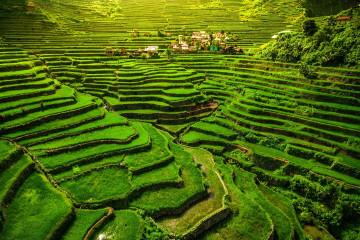 Reise Philippinen: Reisterrasse auf Luzon