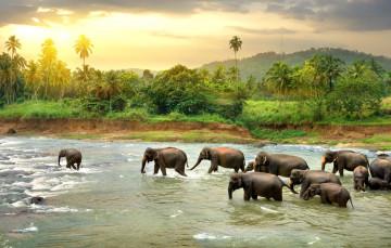 Sri Lanka Urlaub - Elefanten