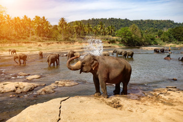 Sri Lanka Reise: Elefanten