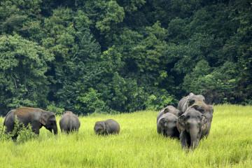 Thailand Reise: Elefanten im Khao Yai Nationalpark