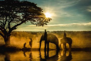 thailand elefanten reiten