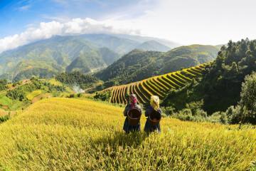 Reise Vietnam: Reisfelder
