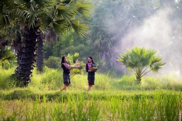 Vietnam Reise - Reisfelder - Frauen