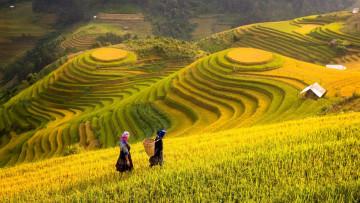 Reise Vietnam: Reisfeld und Bauern