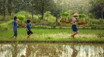 Reise Vietnam Reisbauern