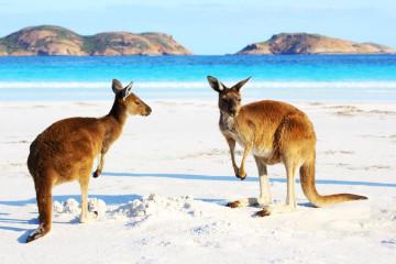 Australien Reisen Kangaroo Island