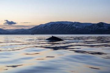 Island Akureyri Wal