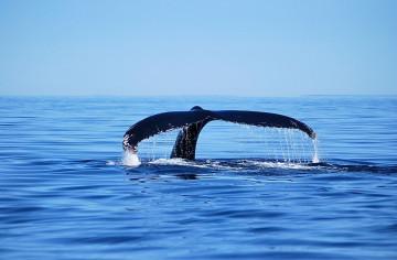 Kanada Reise Neufundland Walbeobachtung