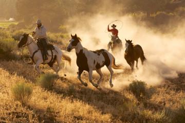 Reise Westkanada - Calgary Stampede - Rodeo Show
