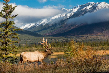 Kanada Reise: Hirsch