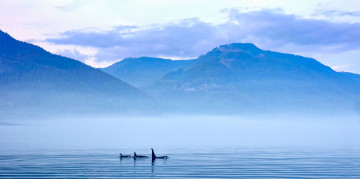 Kanada Reise: Whale Watching Vancouver Island