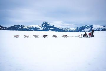 Kanada Reise: Yukon Hundeschlitten