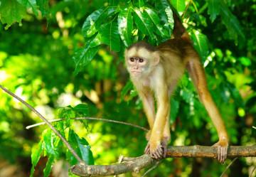 Brasilien Reise: Affe