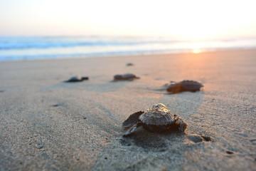 Brasilien Reise: Meeresschildkröten