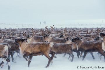 © Tundra North Tours
