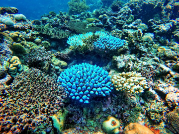 Südsee Reise - Korallenriff