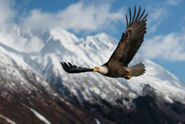Alaska & Yukon Reise