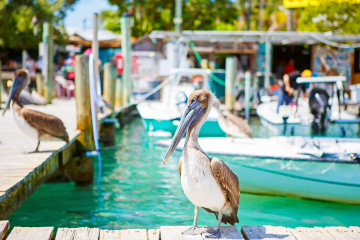 Florida Reise