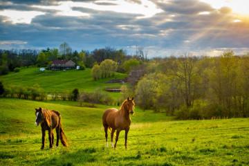 USA Reisen: Ranchurlaub