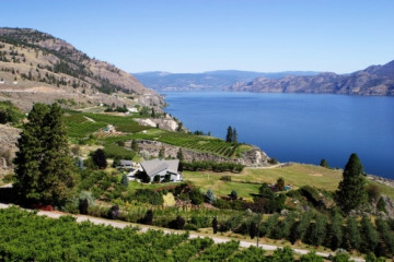vineyard on Okanagan Lake nahe Summerland ©Destination B.C., Don Weixl