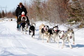 Hundeschlitten Churchill, Manitoba, Kanada