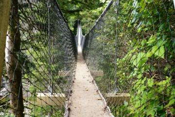 Walbran-Creek