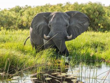 Botswana - luxuriöse Flugreise