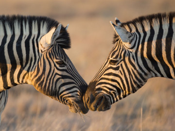 Afrika Urlaub - Namibias Höhepunkte