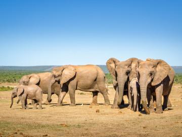 Südafrika - Große Rundreise Reise