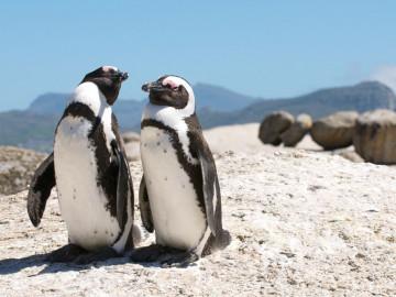 Südafrika - Garden Route Reise