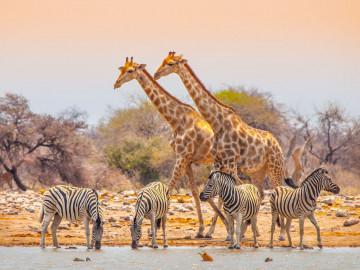 Namibia - Rundreise mit Kapstadt