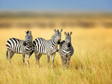 Südafrika - klassische Rundreise