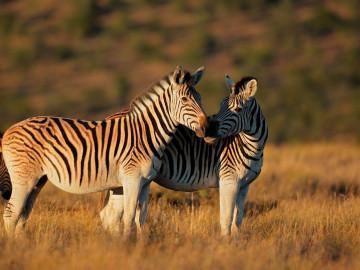 Namibia - PKW-Rundreise