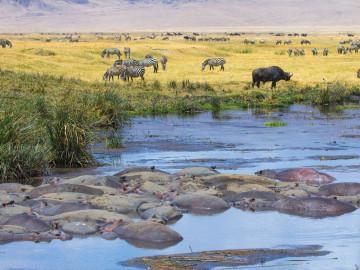 Afrika Reise Safari
