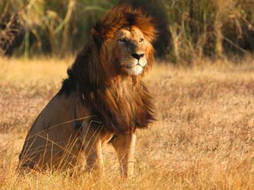 Afrika Tansania Reise